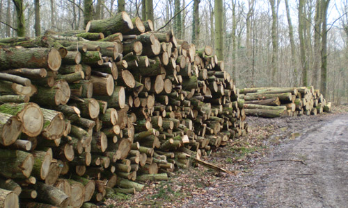 Round timber Sales - Firewood - Roundwood