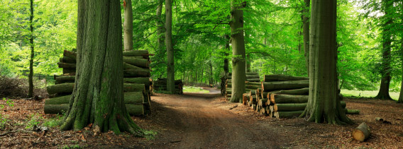 Forest Management Strategies