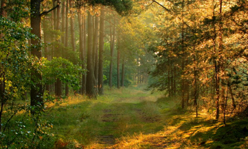 Forest Management Silviculture
